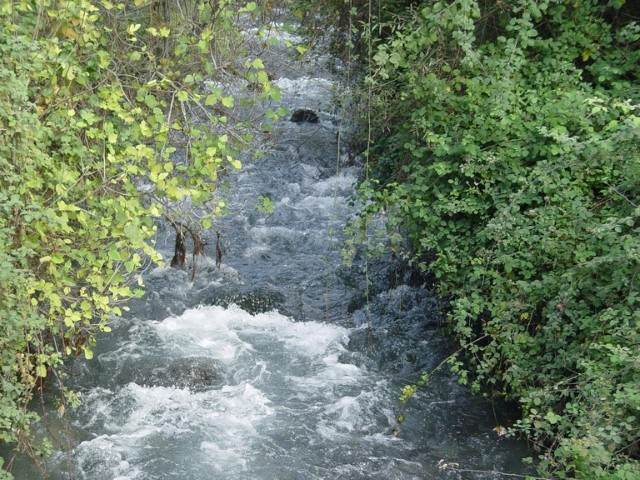מים זורמים בנחל