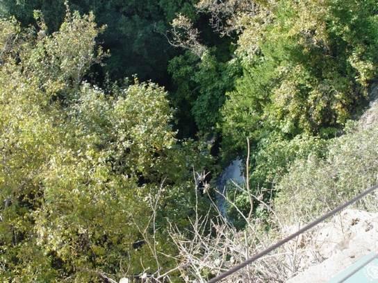 עצי אלון ירוקים