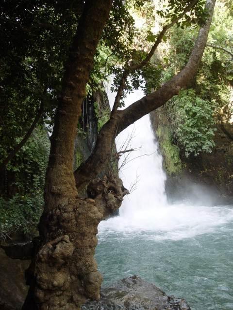 עץ על רקע מפל מים 2