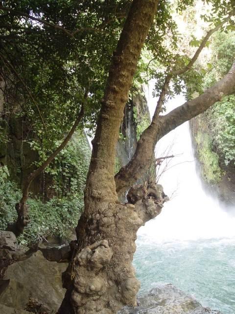 עץ על רקע מפל מים